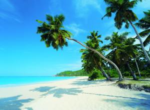 palm-paradise-pr1819